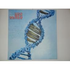 American Genes